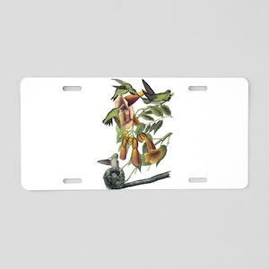 Ruby-throated Hummingbird Aluminum License Plate