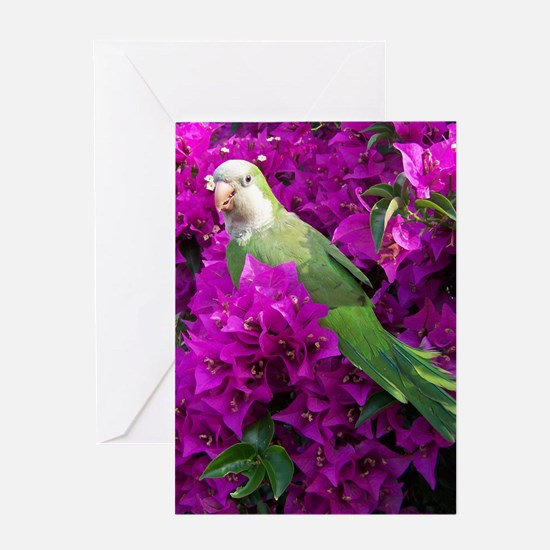 Quaker Parrot Greeting Card
