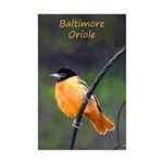Baltimore Oriole Mini Poster Print
