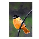 Baltimore Oriole Postcards (Package of 8)