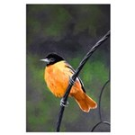 Baltimore Oriole Large Poster