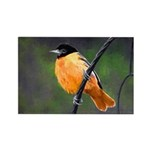 Baltimore Oriole Rectangle Magnet (100 pack)