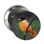 Baltimore Oriole 2.25