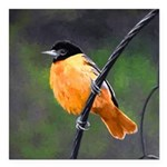 Baltimore Oriole Square Car Magnet 3