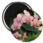 Peach Phaelanopsis Orchids Magnet