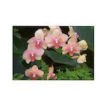 Peach Phaelanopsis Orchids Rectangle Magnet