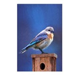 Bluebird (Female) Postcards (Package of 8)
