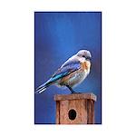 Bluebird (Female) Sticker (Rectangle 10 pk)