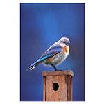Bluebird (Female) Large Poster