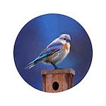 Bluebird (Female) 3.5