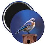 Bluebird (Female) Magnet