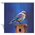 Bluebird (Female) Shower Curtain