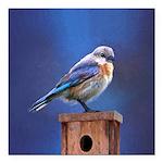 Bluebird (Female) Square Car Magnet 3