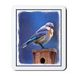 Bluebird (Female) Mousepad