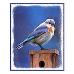 Bluebird (Female) Small Poster