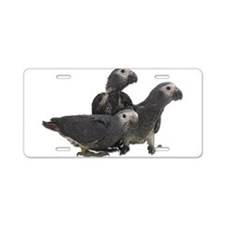 African Gray Parrot Babies Aluminum License Plate