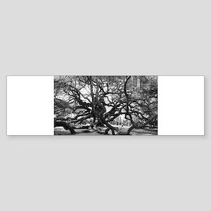 Angel Oak Bumper Sticker