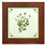 Chamomile Framed Tile