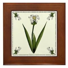 White Lily Framed Tile