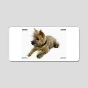 Cairn Terrier Puppy Aluminum License Plate