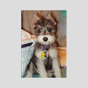 Schnauzer Puppy Rectangle Magnet