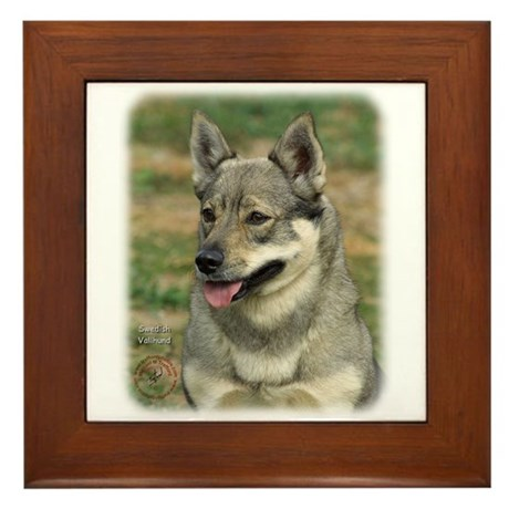 Swedish Vallhund 9J100D-11 Framed Tile