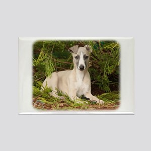 Whippet 9Y563D-005 Rectangle Magnet