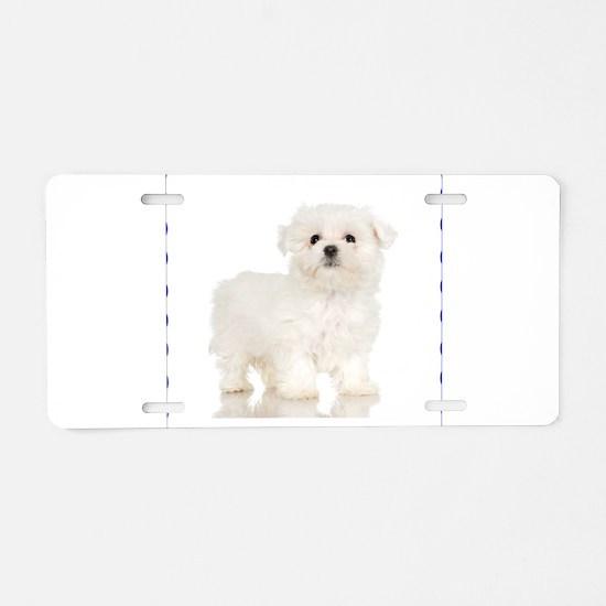 Maltese Puppy Aluminum License Plate