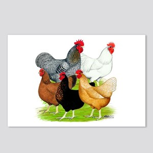 Sex-link Chicken Quintet Postcards (Package of 8)