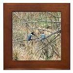 Kingfisher Pair Framed Tile