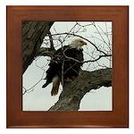 Bald Eagle Right Framed Tile