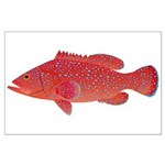 Coral Hind Grouper Posters