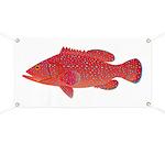 Coral Hind Grouper Banner