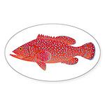 Coral Hind Grouper Sticker