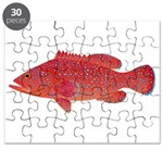 Coral Hind Grouper Puzzle