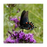 Spicebush Swallowtail Underwing Tile Coaster
