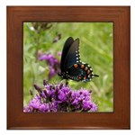 Spicebush Swallowtail Underwing Framed Tile