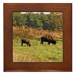 Buffalo Framed Tile