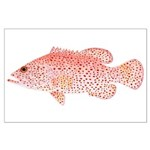 Strawberry Grouper Large Poster