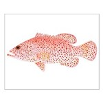 Strawberry Grouper Small Poster