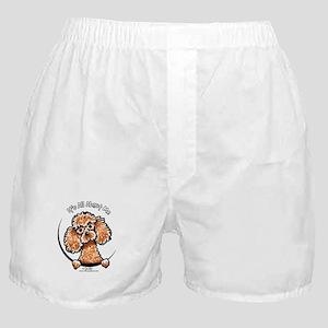 Apricot Poodle IAAM Boxer Shorts