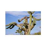 Tucson Saguaro Monster Rectangle Magnet (10 pack)