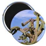 "Tucson Saguaro Monster 2.25"" Magnet (100 pack)"