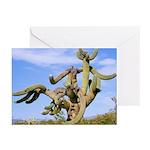 Tucson Saguaro Monster Greeting Cards (Pk of 20)