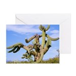 Tucson Saguaro Monster Greeting Cards (Pk of 10)