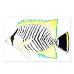 Chevron Butterflyfish Postcards (Package of 8)