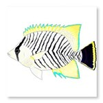 Chevron Butterflyfish Photo Wall Tile