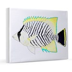 Chevron Butterflyfish 8x10 Canvas Print