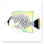 Chevron Butterflyfish Square Car Magnet 3