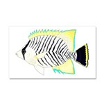 Chevron Butterflyfish Car Magnet 20 x 12